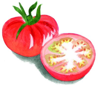 tomate einzeln